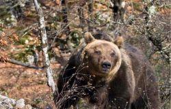 WWF a Natale mettici il cuore....adottiamo una specie a rischio