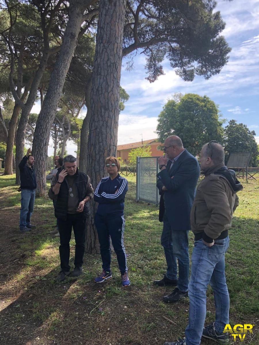 Fiumicino, messa in sicurezza alberature Isola Sacra