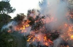 Incendi Amazzonia, il WWF detta le priorità
