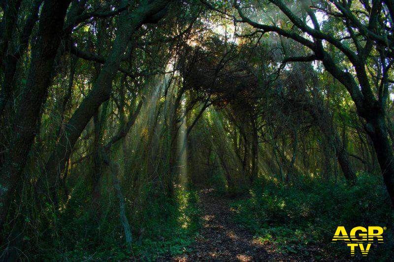 WWF, le oasi di Fiumicino modello per l'Africa