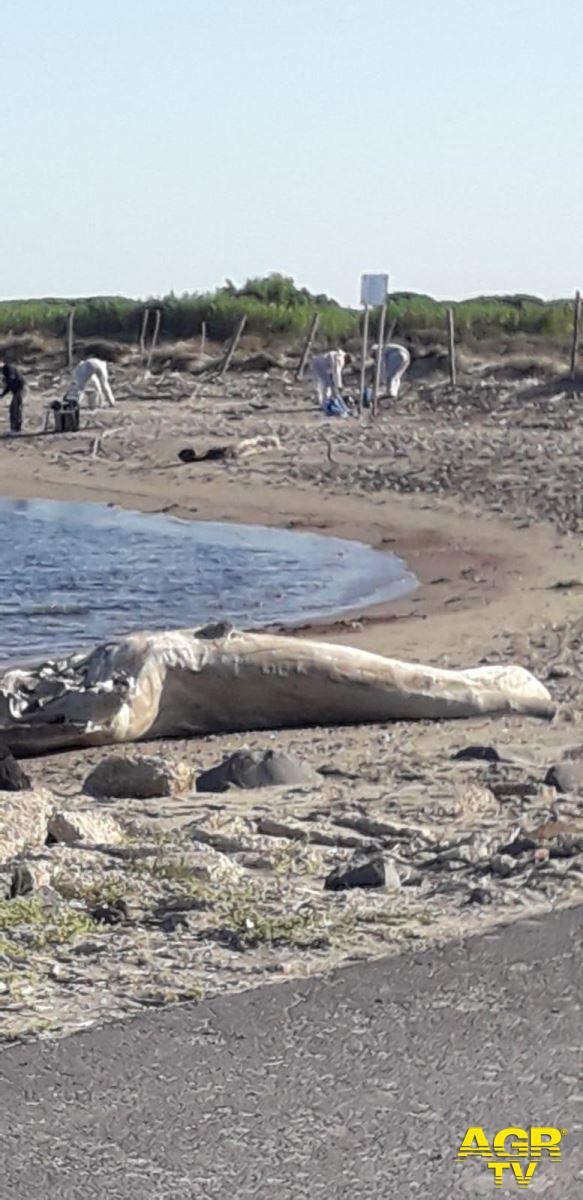 Fiumicino, tirata a lucido...la spiaggia di Coccia di Morto