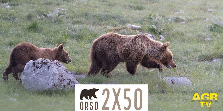WWF 50 orsi a Montecitorio