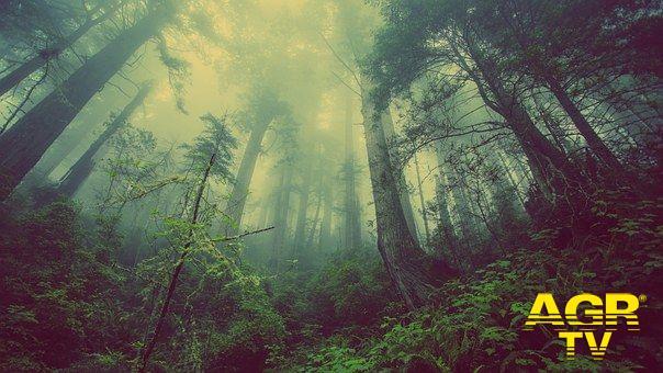 Nel Lazio 6 milioni di nuovi alberi