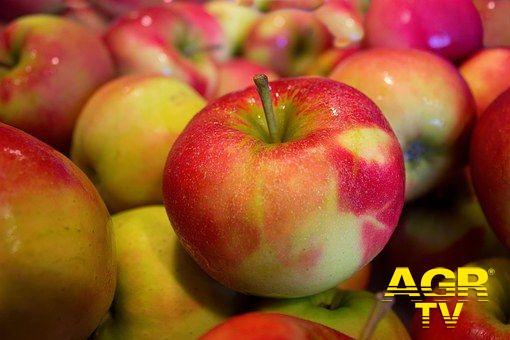 Agroalimentare, la mela non è avvelenata