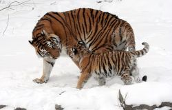 WWF, nella notte di Halloween, difendiamo orsi, elefanti e tigri