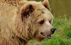 WWF, biodiversità in Italia, la metà a rischio