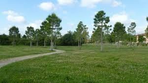 Ostia, affidamento aree  verdi si parte