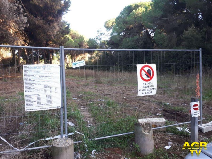 Ostia, manutenzione della pineta di Procoio, chiesta la sospensione cautelativa