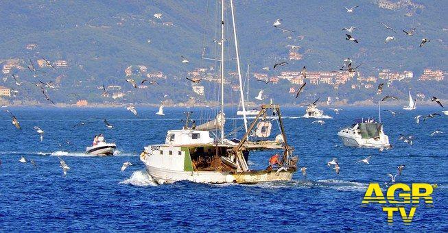 WWF, i pescatori di Anzio e Fiumicino pescano...la plastica