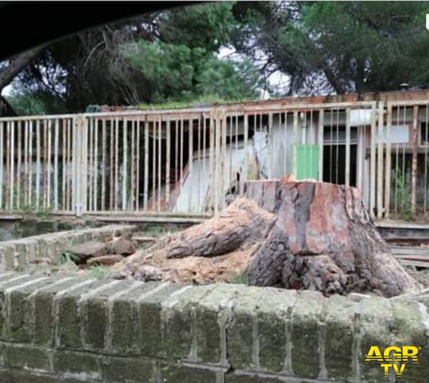 Ostia, quale Giornata nazionale degli alberi...?