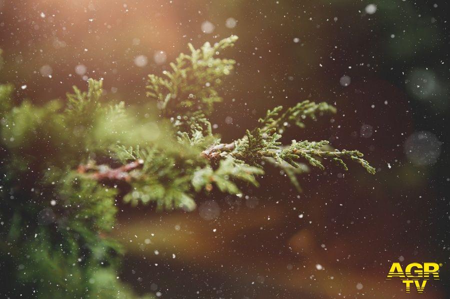 Natale, meglio l'alberello finto...o vero?