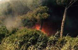 2019, l'anno di fuoco per le foreste del pianeta