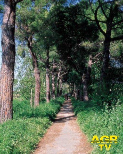 Regione Lazio, o.k. ai piani d'assetto della riserva naturale dell'Acquafredda e della Marcigliana