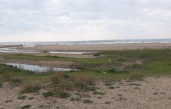 Fiumicino, la riserva naturale del litorale ha il suo piano di gestione