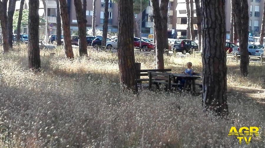 Alberi e boschi per il clima, convegno di studio ad Ostia Antica