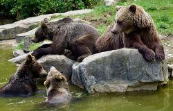 WWF tutti in piazza per proteggere la Biodiversità