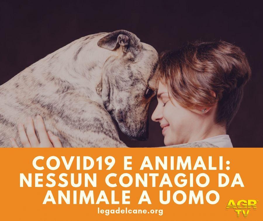 Covid-19, cani e gatti non sono fonte di contagio
