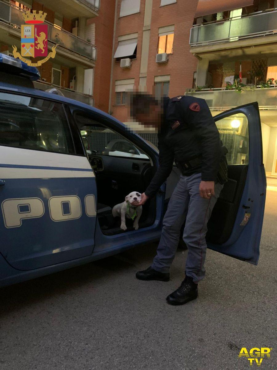 Un cucciolo abbandonato è stato adottato dal poliziotto che l'ha salvato