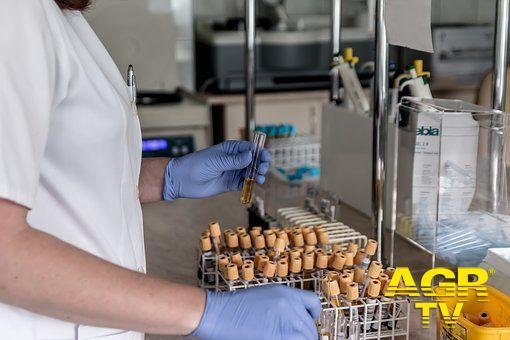 Plasma e anticorpi nella sfida al Coronavirus