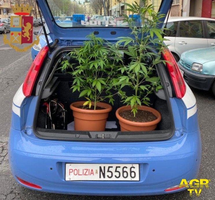 Roma, scoperta mini serra di marjuana a San Basilio