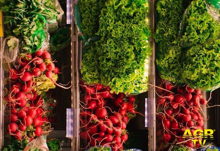 Agricoltura, l'Italia scopre l'orto in terrazza