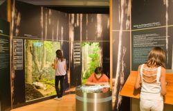 M5S – X Municipio, approvato documento su museo di scienze naturali