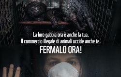 WWF, stop ai traffici di animali selvatici, un rischio per biodiversità e la salute
