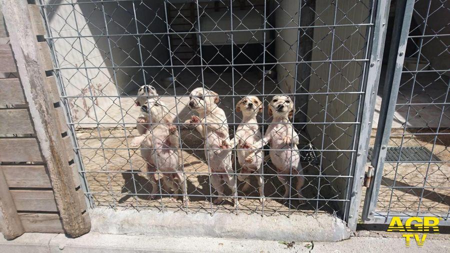 Molise: caccia autorizzata adozioni canili bloccate