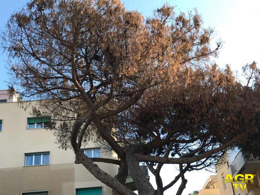 alberi ammalorati
