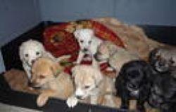 Protezione animali, nasce il manuale Norme Di Diritto Penale e Amministrativo a Tutela degli animali