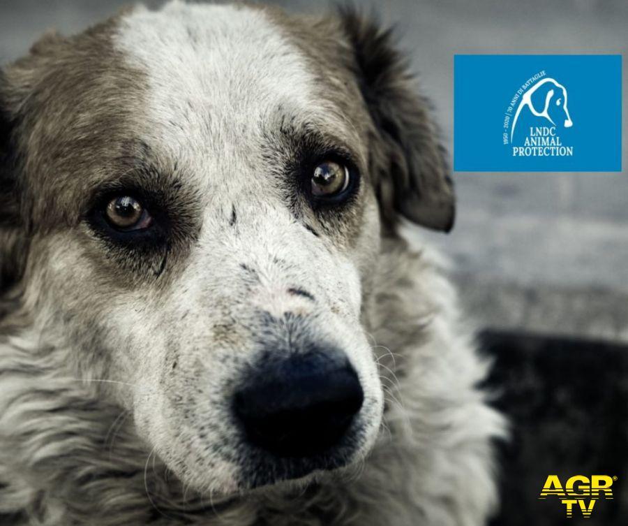 Uccide brutalmente ...il proprio cane, la LNDC: servono pene severe