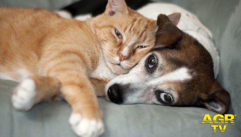 LAV chiede una fiscalità amica degli animali #nonlasciamosolonessuno