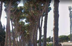 IEVA: Viale di Castel Porziano, abbattimento pini, tutto regolare