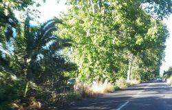 Via Ostiense, dopo l'asfalto la vegetazione, sicurezza a rischio