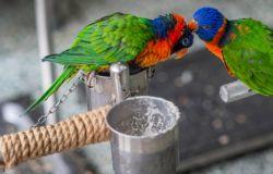 Gli animali esotici non devono esser utilizzati come animali da compagnia: sondaggio SavantaComResperEurogroupdiffuso da LAV