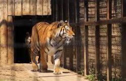Vietare il commercio di animale esotici, appello LAV al Ministro dell'ambiente COSTA
