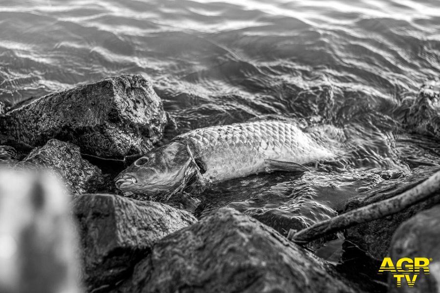 Tevere, moria dei pesci, le possibili cause