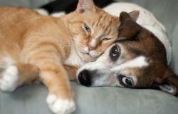 Tagliamo i costi per gli animali di famiglia e favoriamo le adozioni:petizione LAV al Ministro delle Finanze,Gualtieri
