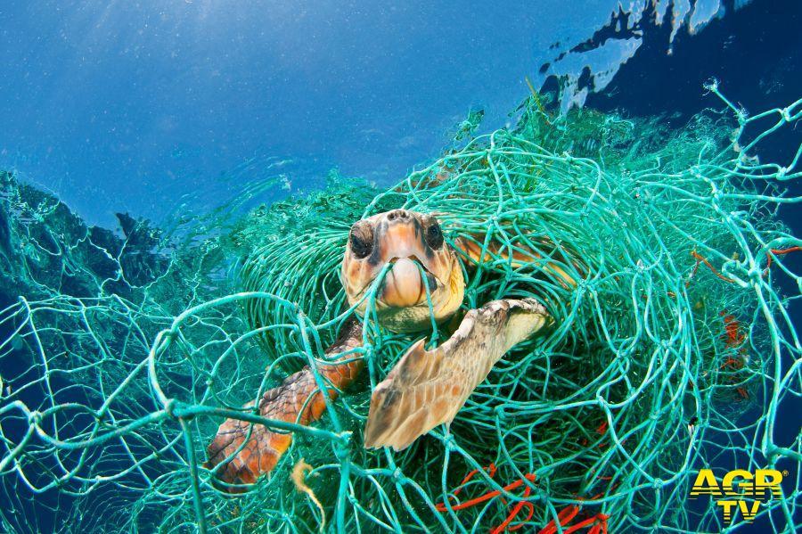 tartaruga intrappolata foto WWF
