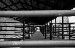 Coronavirus,contagi nei mattatoi, l'OIPA: rivedere scelte alimentari per il benessere degli animali