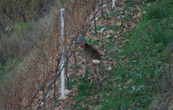 Il lockdown ha evidenziato l'impatto dell'uomo sulle specie animali a livello mondiale