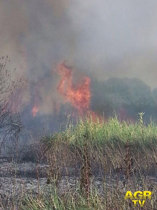 IX Municipio, il fuoco brucia le sterpaglie e fa...manutenzione