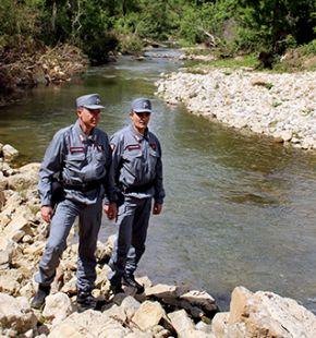 Carabinieri Forestali, stop al taglio abusivo delle alberature
