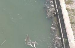 Tevere, nuova moria di pesci, chiesto monitoraggio del fiume