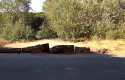 tronchi bloccano accesso pineta