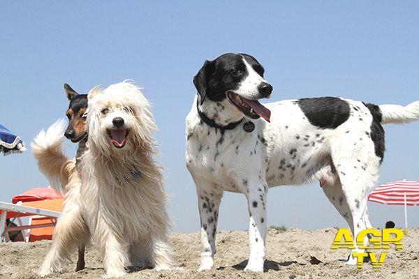Svolta nella veterinaria, si possono prescrivere anche i farmaci equivalenti all'uso umano
