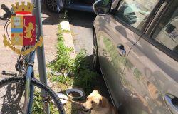 il cane legato al palo