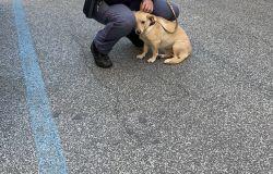 il cane con  il suo salvatore