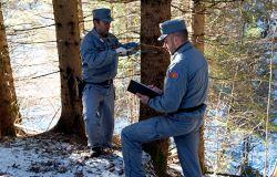 carfabinieri forestali