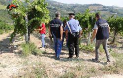 ASCOLI PICENO: Conclusa operazione anti caporalato dei Carabinieri, decine di aziende coinvolti